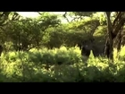 Wild Attack 106 BLACK MAMBA SNAKES   AFRICAS MOST DANGEROUS SNAKE FULL NATURE WILDLIFE DOCUMENTARY A