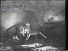 Aslan ve Kaplan Dövüşü